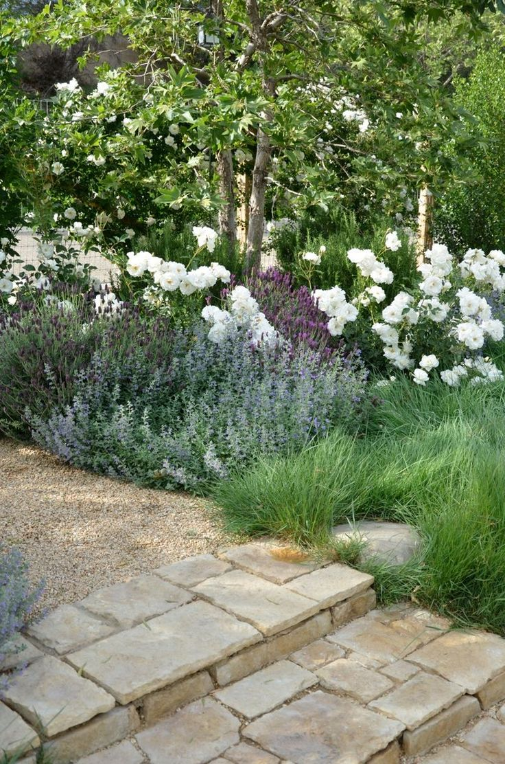 "Patina Farm: white Floribunda roses add large drifts of white this time of year. Selected several types of lavender and two types of ground cover, Catmint and Lamb's Ear.  Native CA Agrostis ""no mow""grass."