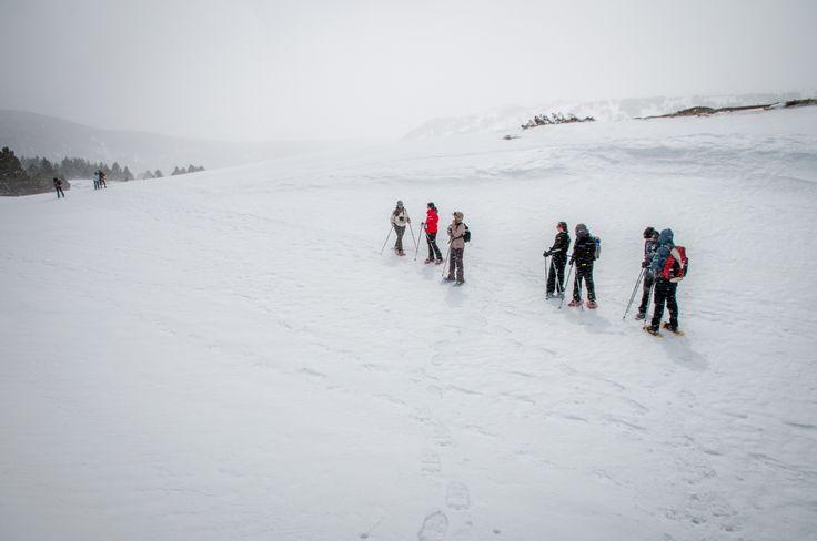 Vive la naturaleza blanca en primera persona, en contacto directo con el medio natural. Raquetas de nieve en el Pirineo Catalán.