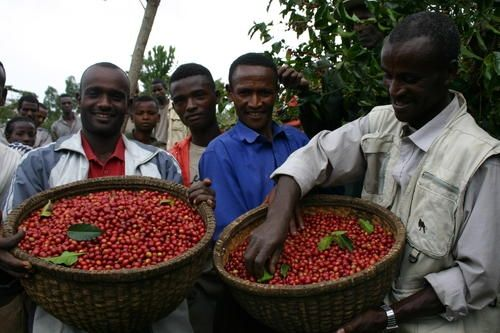 Coffee farmers of Sidama Cooperative Union. Sidama people are cushitic, Kemet closely related to Oromo in culture, identity and economy.