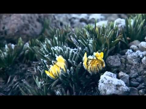 Alan Watts - Adesso - YouTube