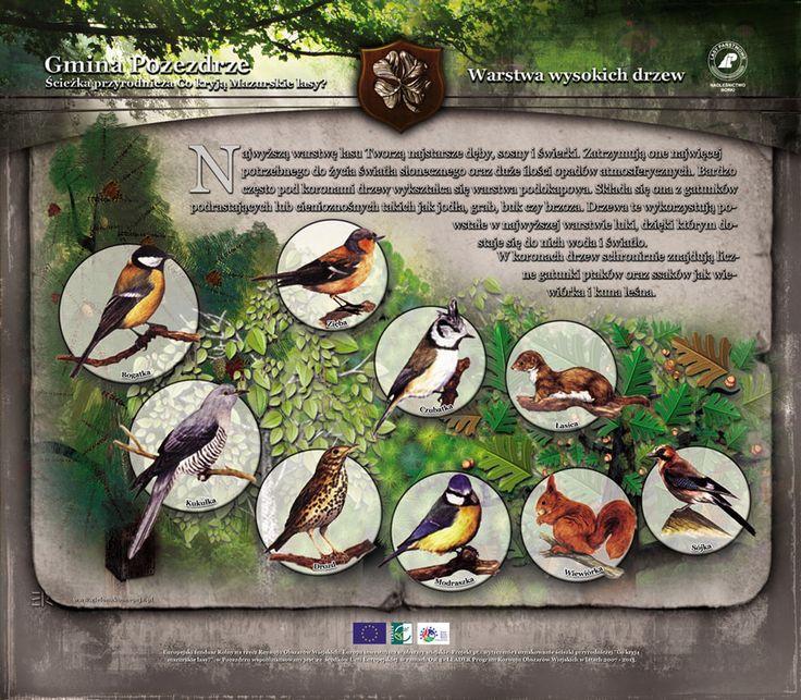 22 best Przyrodnicze tablice edukacyjne images on Pinterest - küchen aus polen