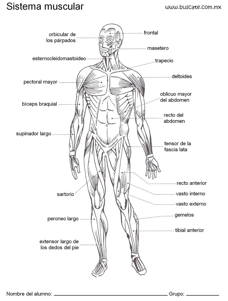 155 best Anatomía Humana. Human anatomy. images on Pinterest ...