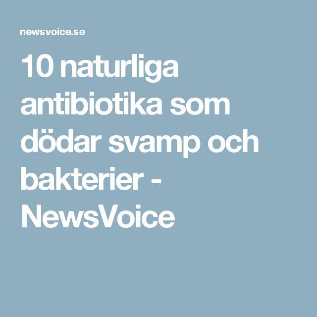 antibiotika svamp
