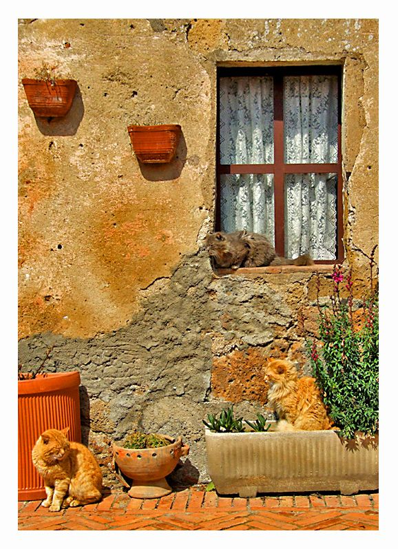 """""""DON'T FRET, MATILDA, THE MISSUS WILL OPEN THE WINDOW SOON AND WE CAN JUMP INSIDE……..SHE DOES THIS FOR ME EVERY MORNING……..SHE ONE GOOD MISSUS………….ccp"""