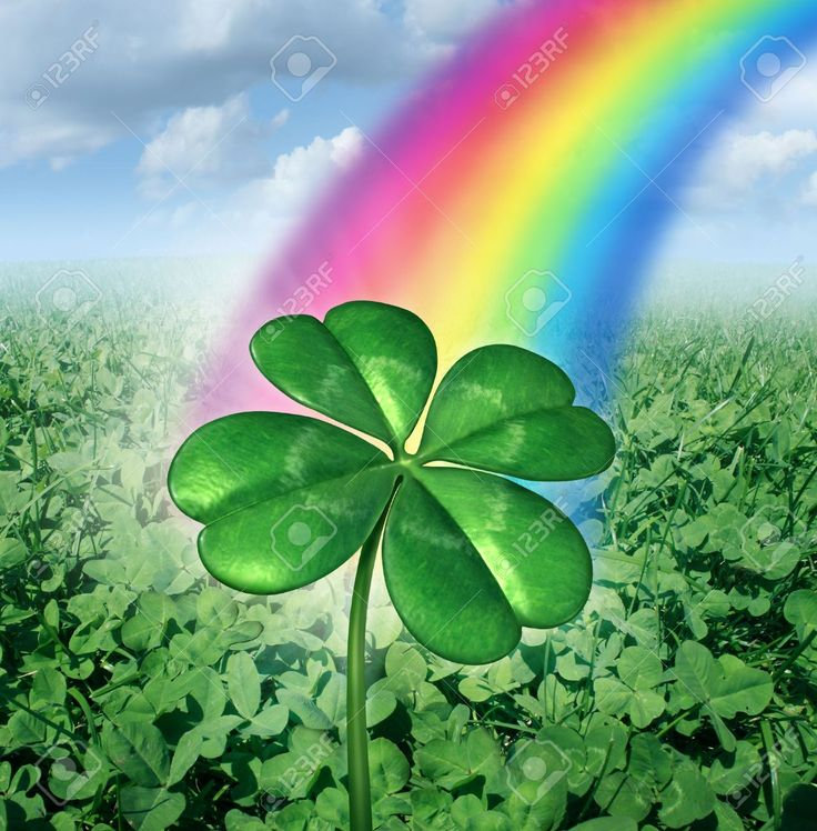 Four leaf clover images stock pictures royalty free