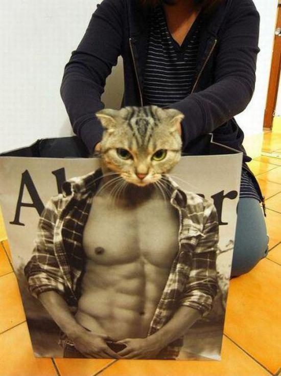 Good Looking Cat | Hahaa.. | Pinterest