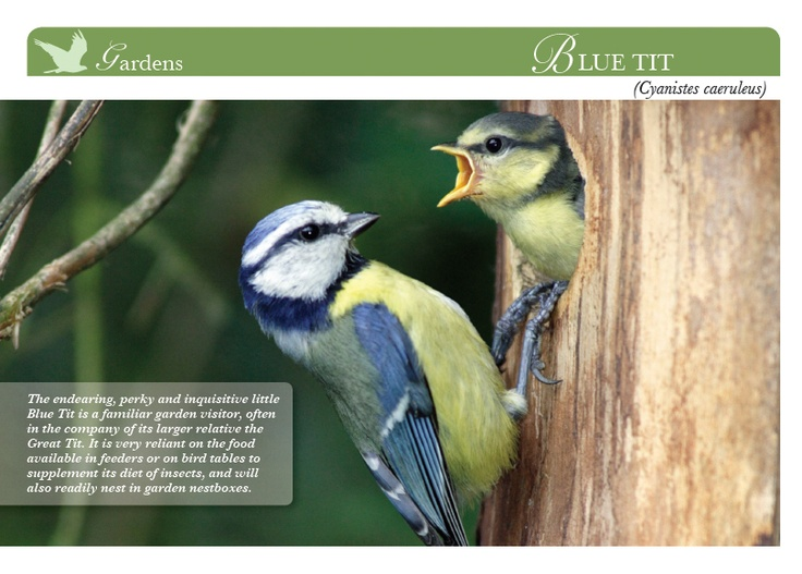 10 Best Beautiful Birds Of Britain Images On Pinterest -6137