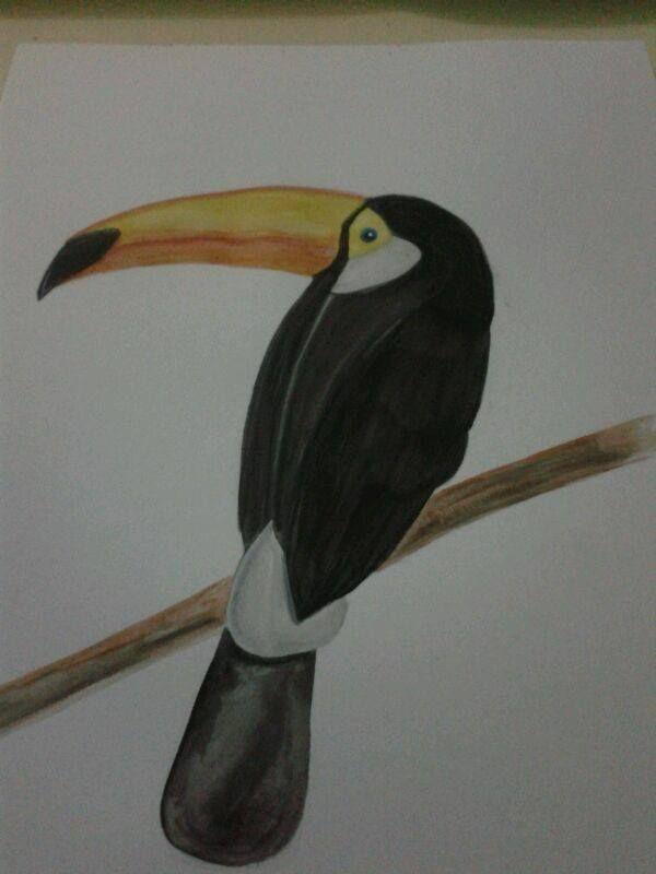 tucan (acuarela)