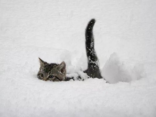 Submarine Snow Cat - Imgur