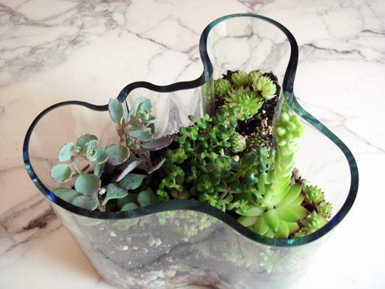 Perfect use of the Aalto vase as a terrarium from Apartment therapy