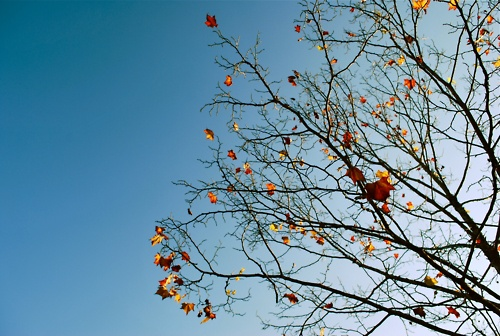 autumn.: Instagram Noelecrook