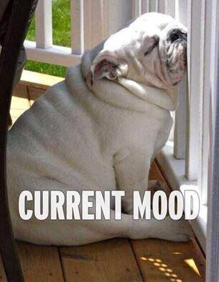 Current mood.. #dog