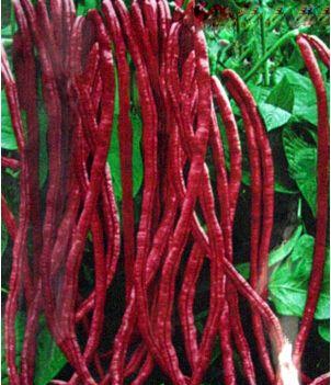 Pas cher Graines de haricots rouges pour la maison livraison gratuite jardin plante extérieur 10 graines, Acheter  Bonsaïs de qualité directement des fournisseurs de Chine:              -                   Paquet en bloc de semences                            -                  G