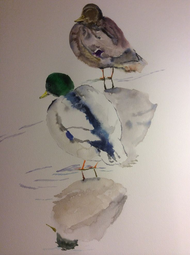 Watercolour ducks