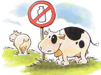 #lattosio #intolleranza #gonfiore #colite #rimedi #lattevegetale Tutto cominciò...: Intolleranza al Lattosio, come comportarsi