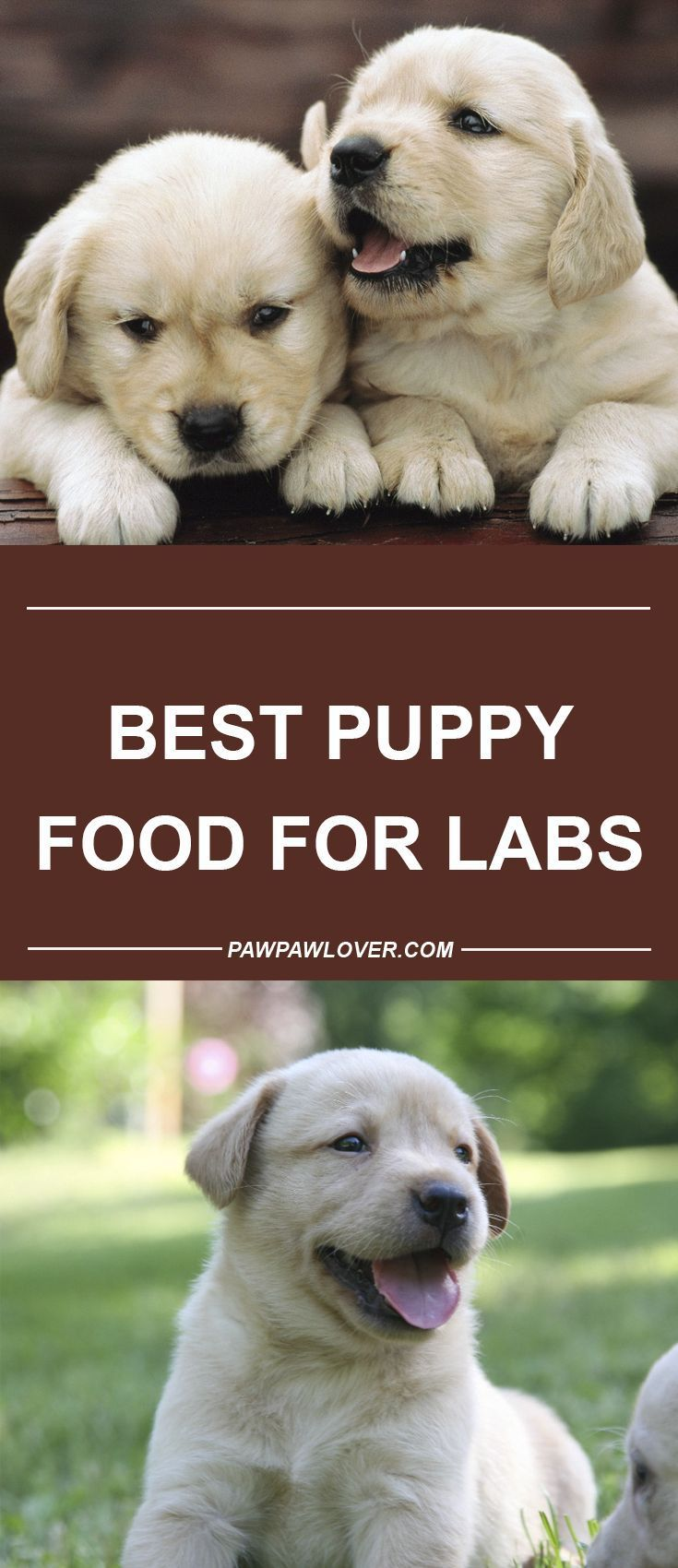 Best Puppy Food For Labs 2020 5 Choices For Growing Pups Best