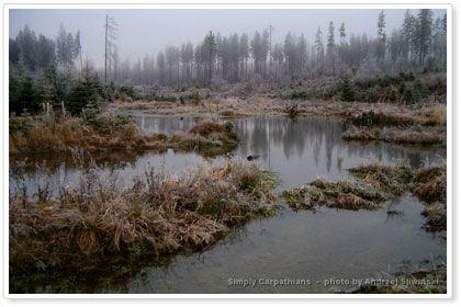 Swamps in the Bieszczady Mountains in #Poland.  www.simplycrpathians.com
