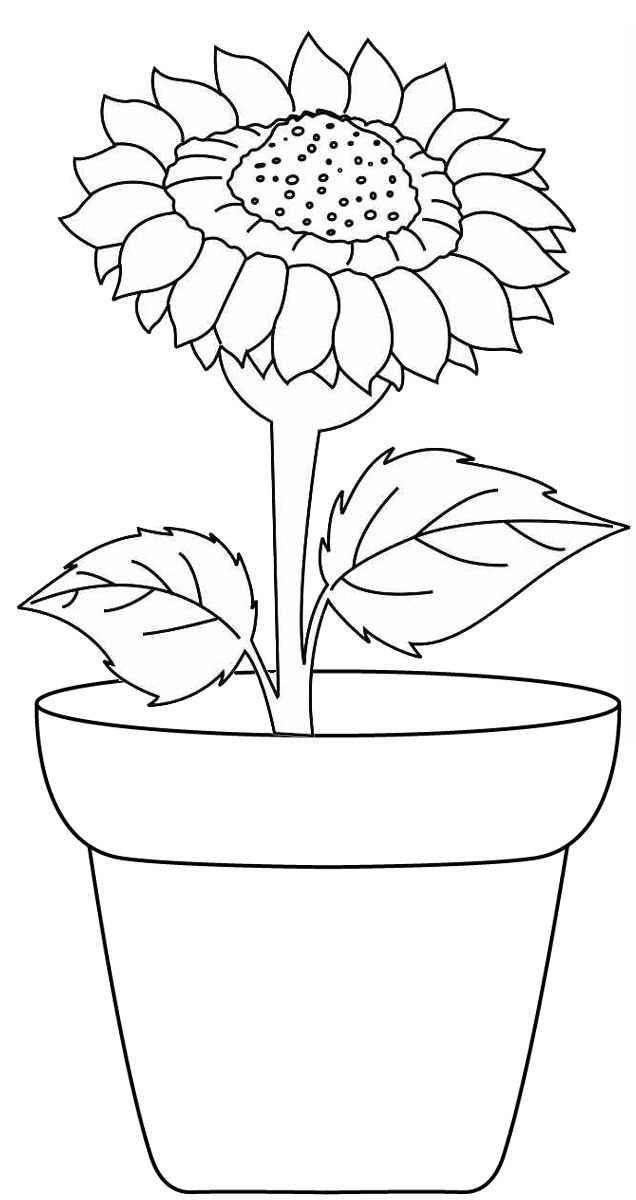 Sunflower Growing In A Pot Coloring Page Dengan Gambar Gambar