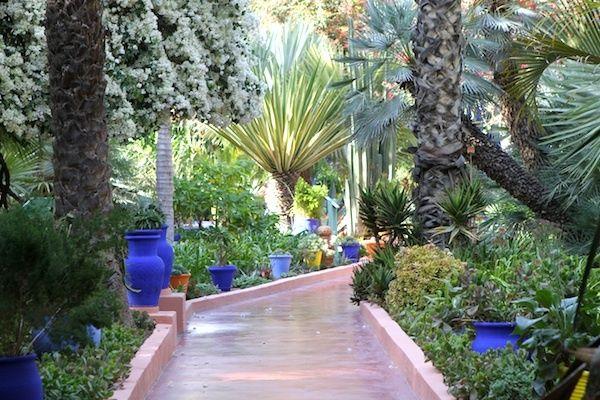 Le jardin majorelle marrakech majorelle garden spain for Le jardin marrakech