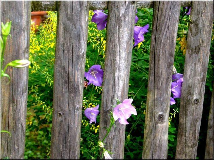 Fenyőfa kerítés, lucfenyő kerítéselem