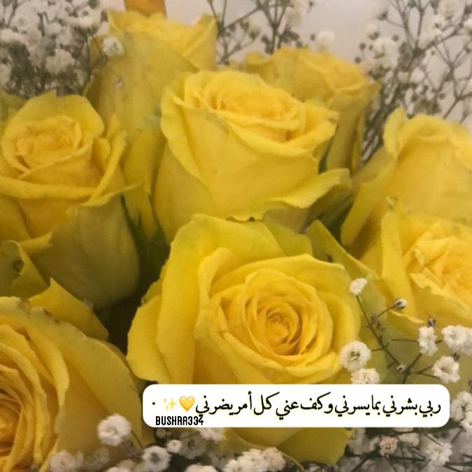 ربي بشرني بما يسرني دعاء ورد اقتباس Rose Flowers Plants