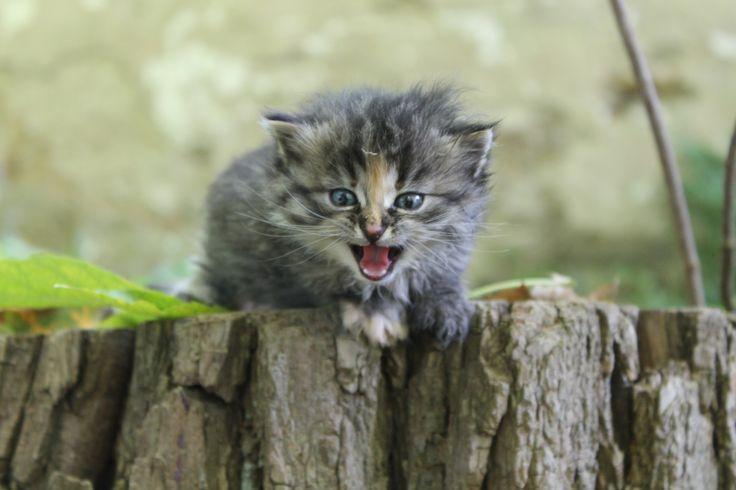 Malá kočička Nature.