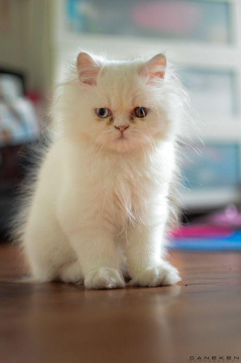 photogenic felines | (Can Eken)