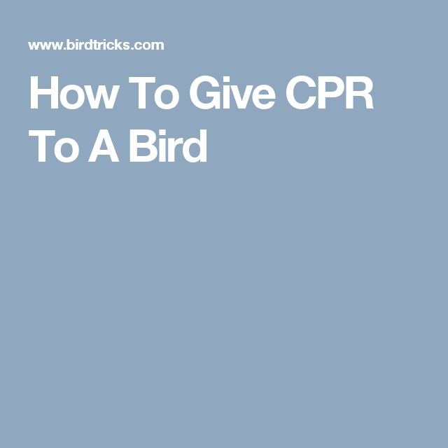 How To Give CPR To A Bird