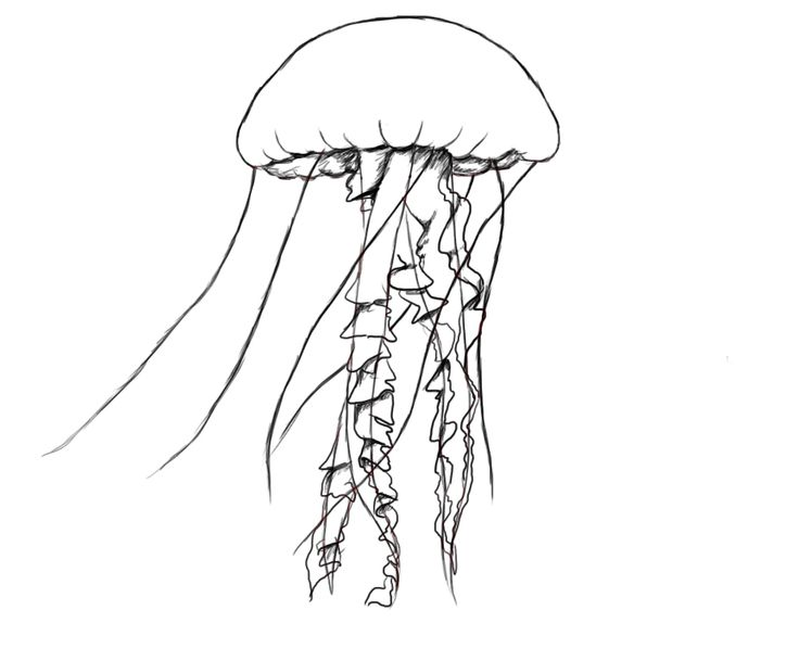 how to draw a jelly fish