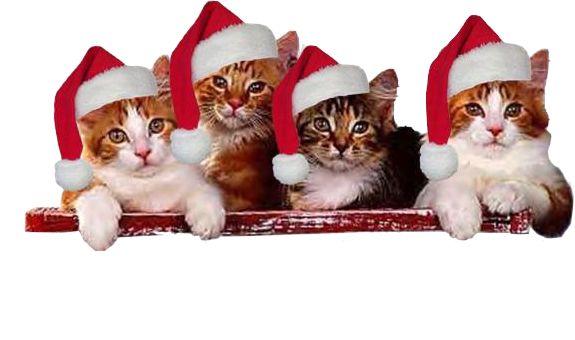 Gyönyörű karácsonyi png ,Gyönyörű karácsonyi png ,Gyönyörű karácsonyi png ,Gyönyörű karácsonyi png dísz,Gyönyörű karácsonyi png dísz,Gyönyörű karácsonyi png dísz,Gyönyörű karácsonyi png dísz,Gyönyörű karácsonyi png dísz,Mikulás-cicák - png,Gyönyörű karácsonyi képdísz - png, - jpiros Blogja - Állatok,Angyalok, tündérek,Animációk, gifek,Anyák napjára képek,Donald Zolán festményei,Egészség,Érdekességek,Ezotéria,Feliratos: estét, éjszakát,Feliratos: hetet, hétvégét ,Feliratos: reggelt…