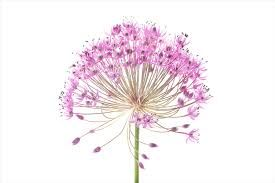 Image result for watercolor flowers free