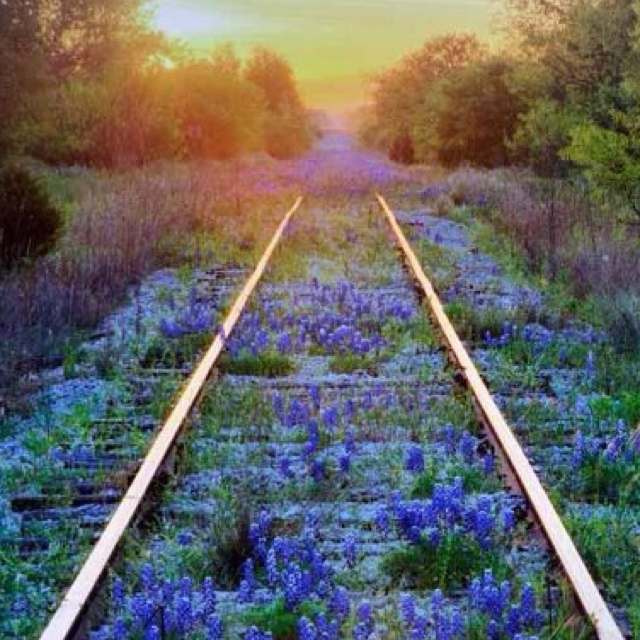 Texas Railroad at Sunset: Life Quotes, Natural Beautiful, Mothers Earth, Blue Bonnets, Training Track, Texas Bluebonnets, Flower, Railroad Track, Mothers Natural