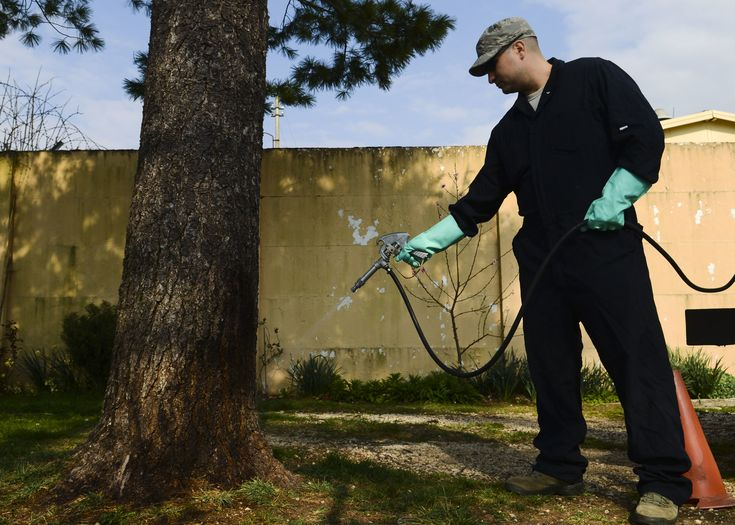 Are you #scared with rats, bedbugs, wasps or any other pernicious pests? then click here - http://safepestcontrol.net.au, Our #pest expert team solve your problem and gives you #best_pest_control_services at reasonable price.