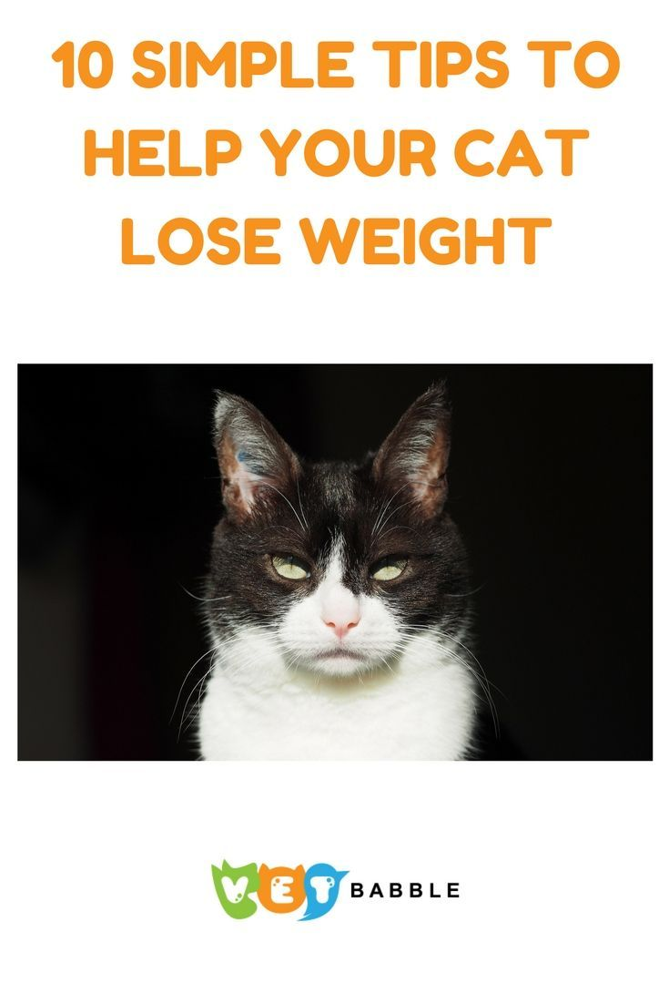 10 simple tips to help your cat lose weight | cat, help cat and dog