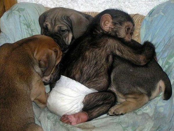 La hermosa historia del bebé chimpancé y su madre adoptiva | La Bioguía