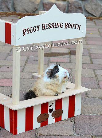 DIY Guinea Pig Kissing Booth - PetDIYs.com