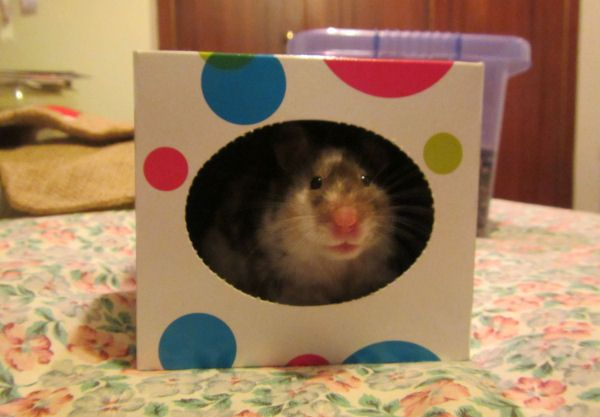 Hamster toys and accessories from recycled household items thread - Hamster Central