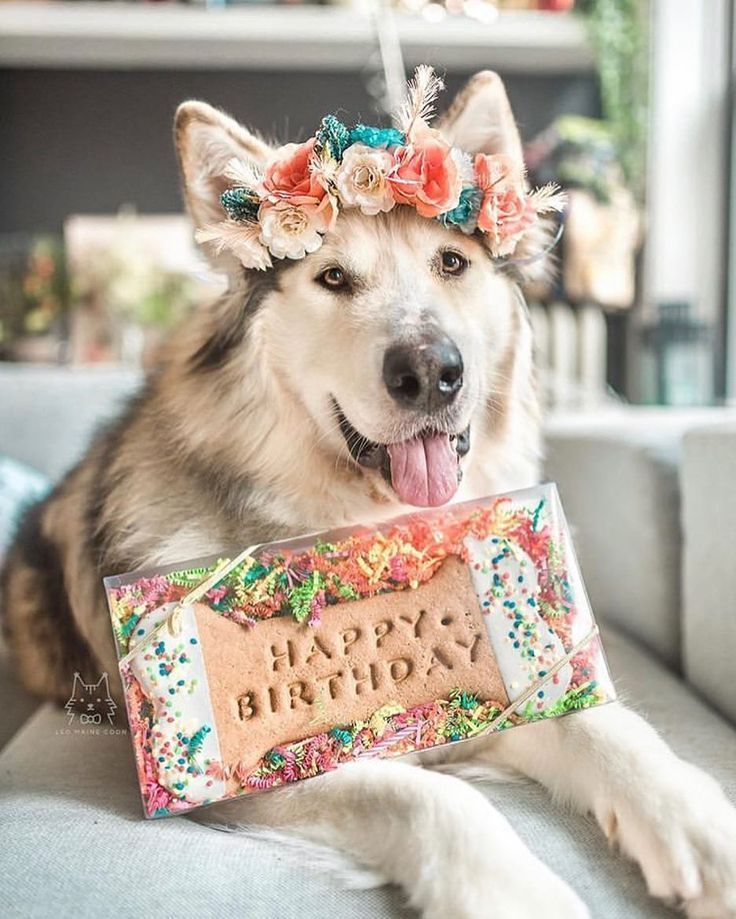 Pictures Of Cats And Dogs Wearing Beautiful Floral Ornamentation