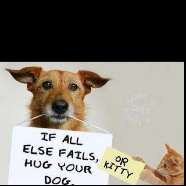 ahCat, Friends, Animal Baby, Quotes, Hug, Pets, Dogs Lovers, Kitty, True Stories