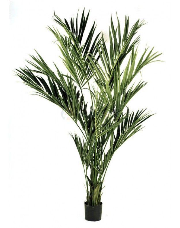 die besten 25 kentia palme ideen auf pinterest monstera deliciosa leben unter freiem himmel. Black Bedroom Furniture Sets. Home Design Ideas