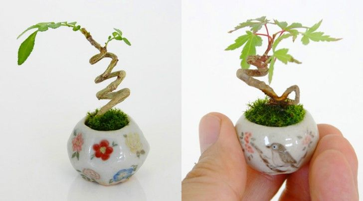 Itsy Bitsy Bonsai Plants Grow in Adorable Thimble-sized Cerami...