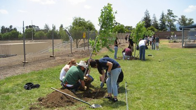 Grant Money Used to Plant 1,700 Trees in 15 Hoosier Communities | Indiana's NewsCenter: News, Sports, Weather, Fort Wayne WPTA-TV, WISE-TV, CW, and MyFOX | Home