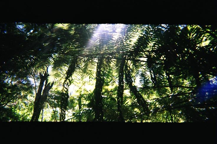 native NZ flora