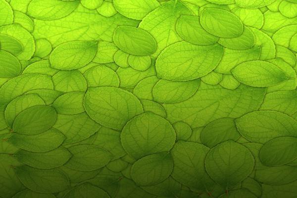Leaves Texture 3