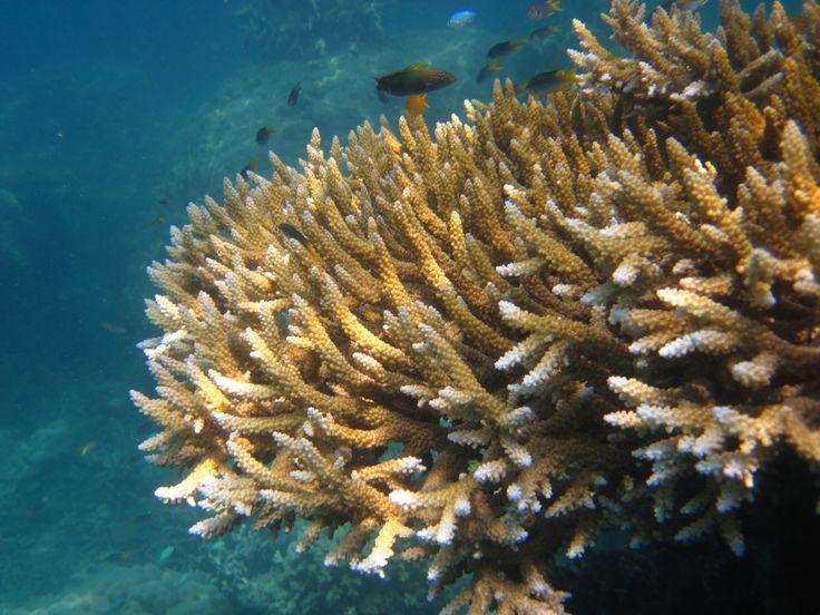 corals beneath Karimunjawa's sea..