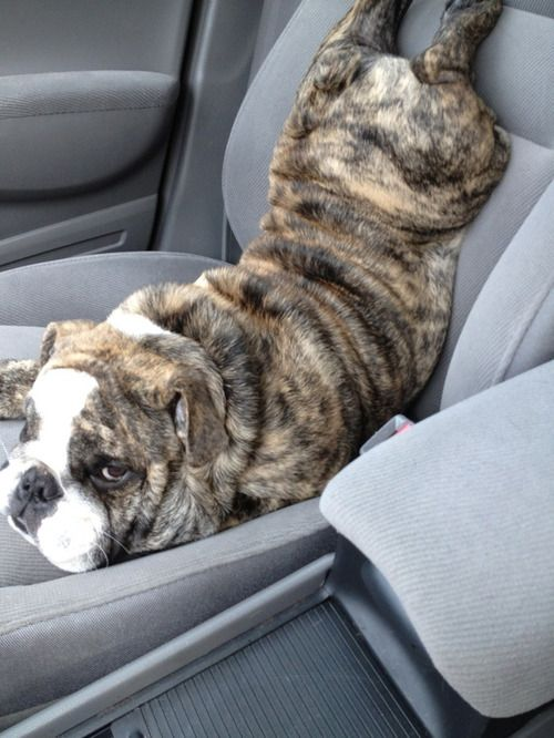 if you have a better idea for how to sit in the car, i'd like to hear it