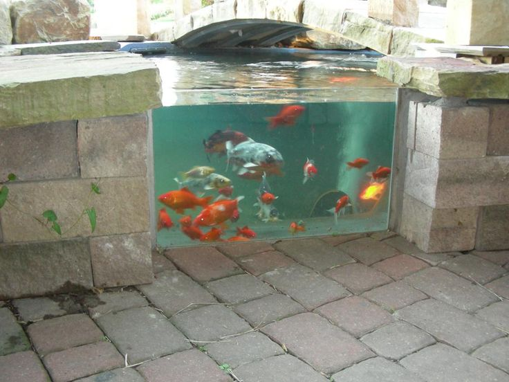 17 best images about ponds on pinterest backyard ponds for Best goldfish for outdoor pond