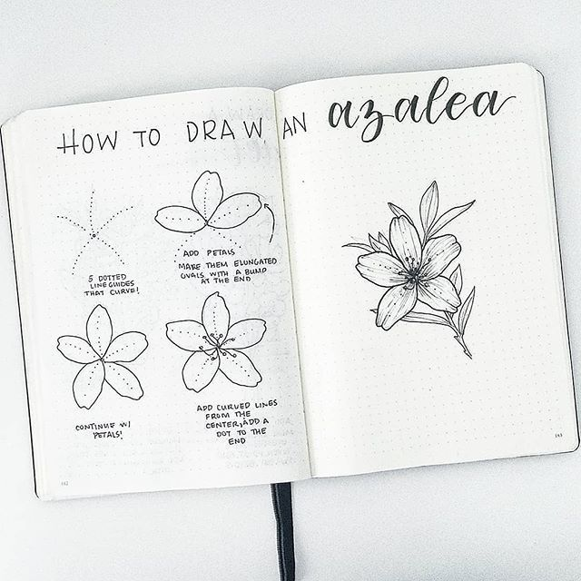 This Is Super Cute Splendidscribbles And I M Sure Lots Of You Could Use This In Your Spreads Too Flower Drawing Tutorials Flower Drawing Easy Flower Drawings