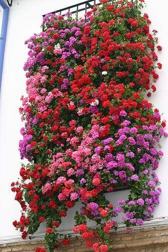 `. Wonderful patio in Cordoba, Andalucía, Spain.