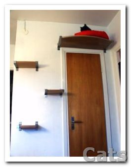 diy cat tower   diy cat tower plans image search results